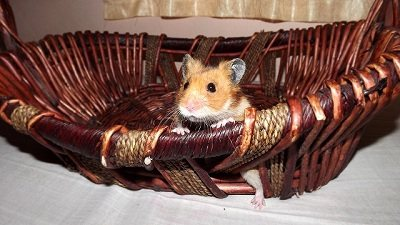 Rilwan's Hammie boy in the bucket