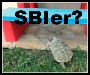 Tortoising along... Are you a SBI! owner?